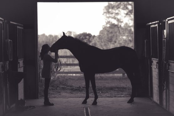 silhouette of horse and rider - Equine End of Life Service