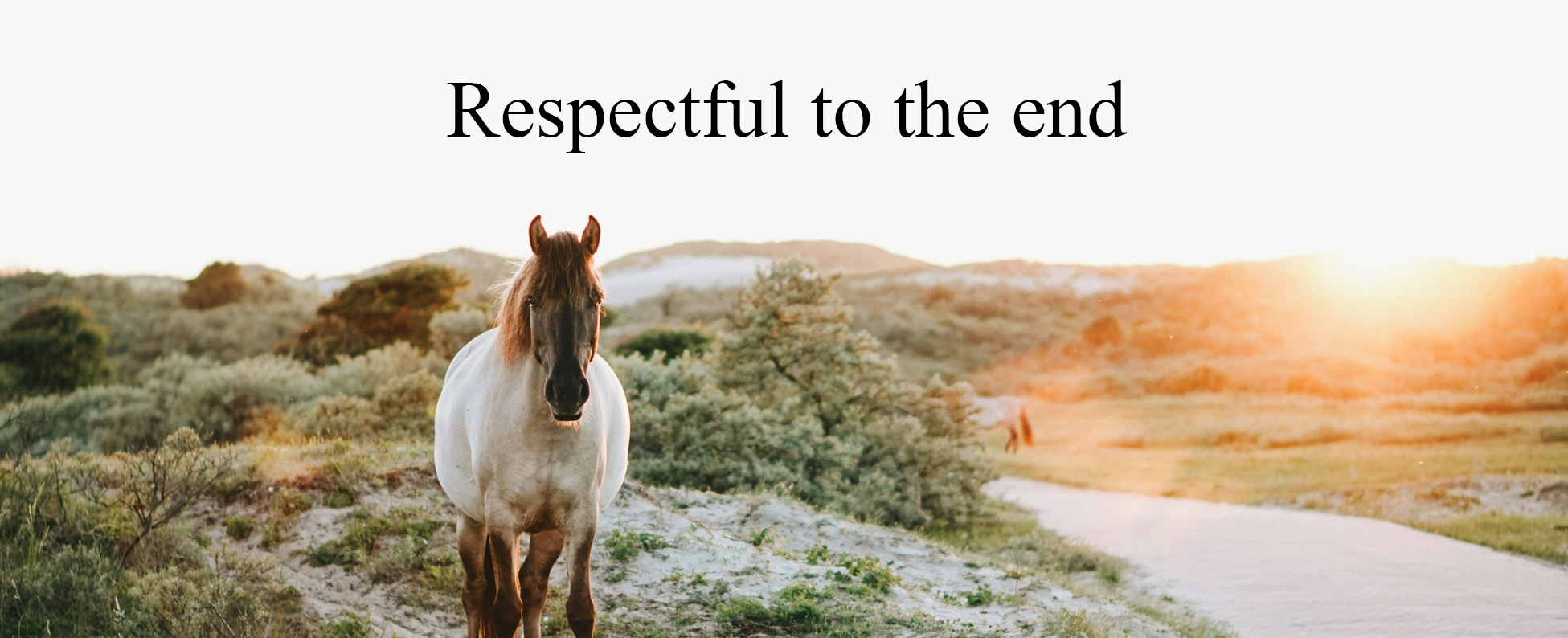 Terms and Conditions - respectful to the end - Equine end of life